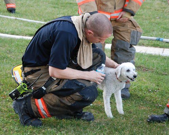 Puppy Rescue 2