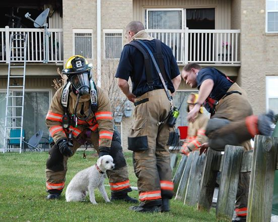 Puppy Rescue 3